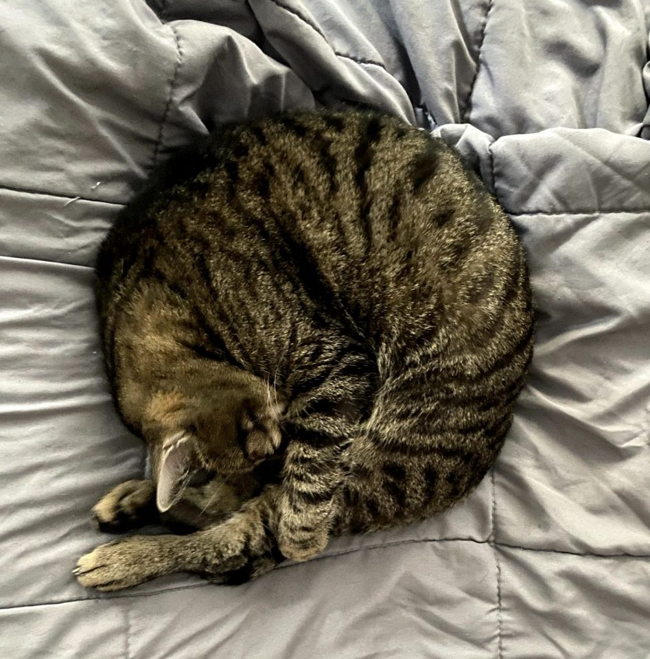 A Striped Cat Curls Into A Swirl On A Bed.